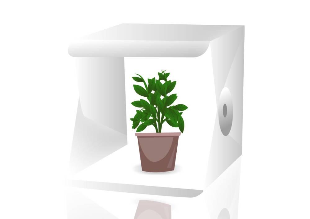 Ilustracija kutije za slikanje proizvoda: Bela pozadina, proizvod - saksija sa cvećem se nalazi u sredini